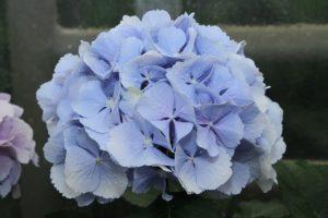 Verena blau